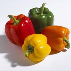 Capsicum Bell Pepper