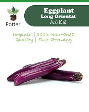 Eggplant Oriental
