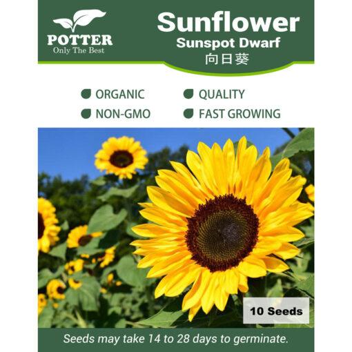 Sunflower sunspot flower seeds