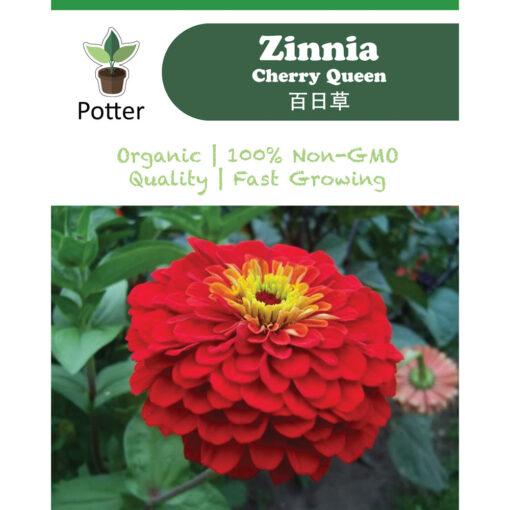 Zinnia-Cherry-Queen-Ad-(Square)
