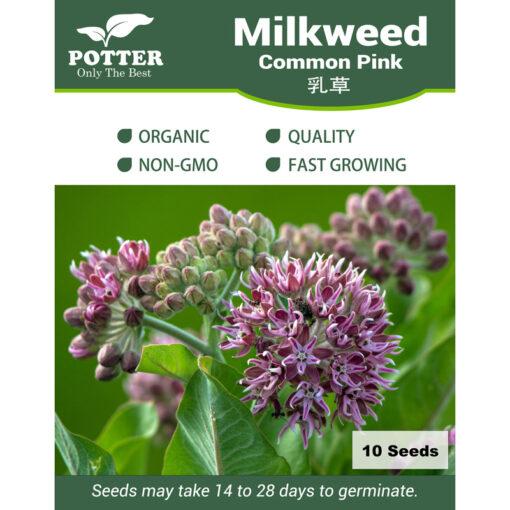 Milkweed Common seeds